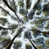 """Commentary: """"Can trees put a stop to global warming?"""""""