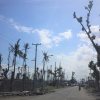 Lessons from Haiyan: Findings from OML Center's work in Tacloban featured in science magazine